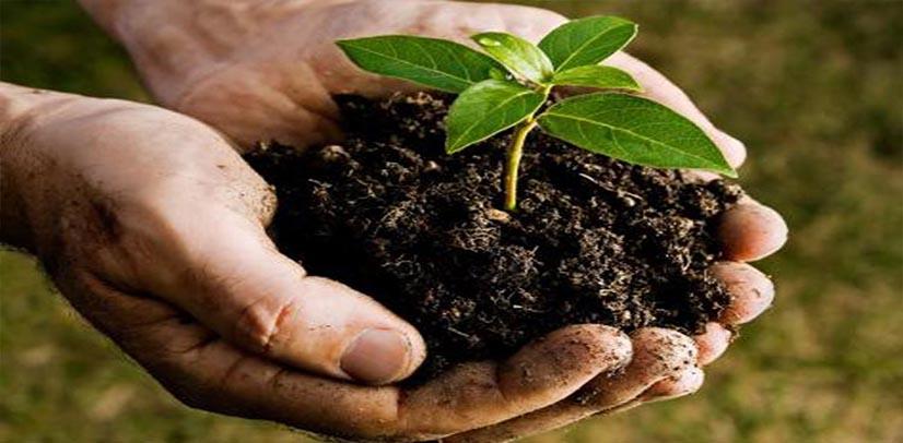Ανάλυση εδάφους κ φυτικών ιστών aliment lab